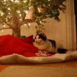 Magellan loves the tree skirt